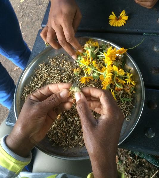 seed save flower heads