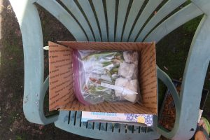 how to ship carnivorous plants